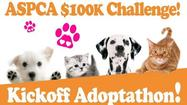Bloomington animal shelter kicks off adopt-a-thon Wednesday