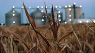 This year's drought has already raised wholesale corn prices dramatically, and consumers will likely soon feel the pinch at the grocery store checkout. Economists are warning of a 3-4 percent rise in food prices this year and next as well, an especially poorly-timed circumstance given the recent weakness in the economy.