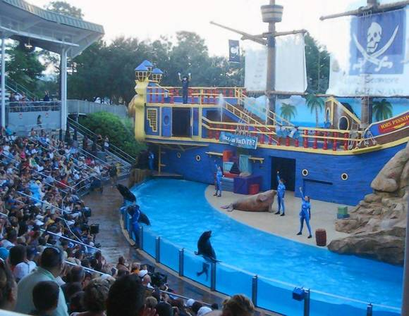 'Sea Lions Tonight' at SeaWorld's Summer Nights
