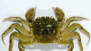 Alien Crab Invasions and Bug Quarantines