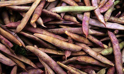 Shelling bean season lasts for only two or three weeks, so get them while you can.