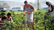 Local food pantries have been receiving fresh vegetables from inmates at the Maryland Correctional Training Center.