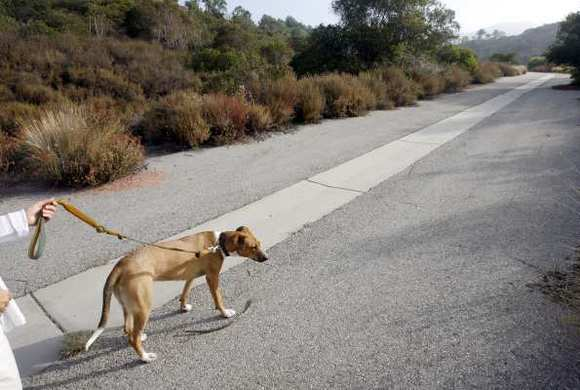 "Gretchen Bingea, who did not want to be shown on camera, walks her dog ""Guido,"" a female Sheperd mix, on Friday, August 3, 2012, near the area where she spotted FBI agent Stephen Ivens' body earlier in the week."