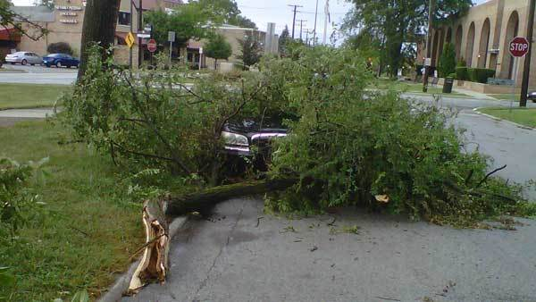 A tree branch down on a car in Homewood.