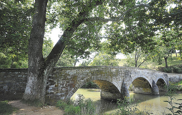 This sycamore tree is believed to have sprouted near the northwest corner of the Burnside Bridge about 170 years ago, about the same time the bridge was built in 1836 at Antietam National Battlefield near Sharpsburg.