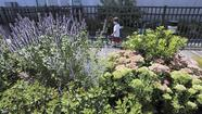 Science Center's Rooftop Garden