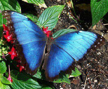 Birds & Blooms magazine explores the myths and facts of butterflies.