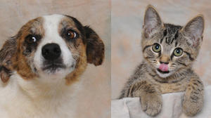 Danville-Boyle County Humane Society pets of the week for Aug. 7