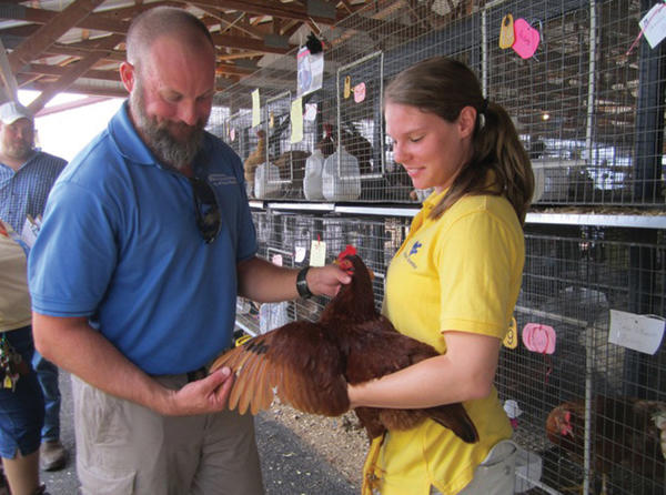 Judge Joe Moritz and West Virginia University student Angela Lamp check a Rhode Island red hen Tuesday at the Berkeley County Youth Fair near Martinsburg, W.Va.