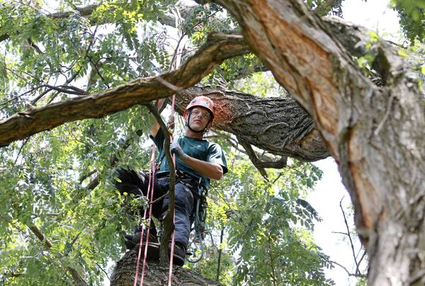 "Beau Nagan, 32, of Westchester, Ill., said he believes ""climbing trees is for boys that never grew up."""