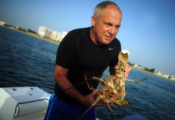 Bill Dennis of Lighthouse Point, carries several Florida Spiny Lobsters he bagged offshore at Lauderdale-by-the-Sea.