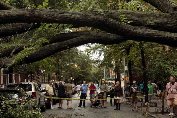 Residents of Brooklyn Heights gather near the American elm that had stood in the New York City neighborhood for more than 80 years until it was toppled by Hurricane Irene in 2011.