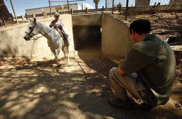 Daniel S. Cooper, right, president of Cooper Ecological Monitoring, checks a remote camera at Tunnel 6, which goes under the 134 Freeway and is used by equestrians, in Griffith Park. Cooper is monitoring possible access routes of mountain lion P-22, who successfully crossed both the 405 and 101 freeways to reach Griffith Park.