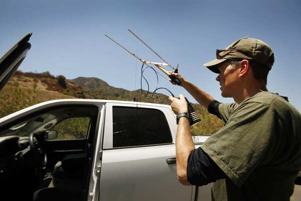 Jeff Sikich, wildlife biologist with the National Park Service, uses a radio receiver near Griffith Park to monitor possible activity by mountain lion P-22. Sikich is using radio telemetry to monitor P-22 and hopes to recapture the lion to attach a new GPS.