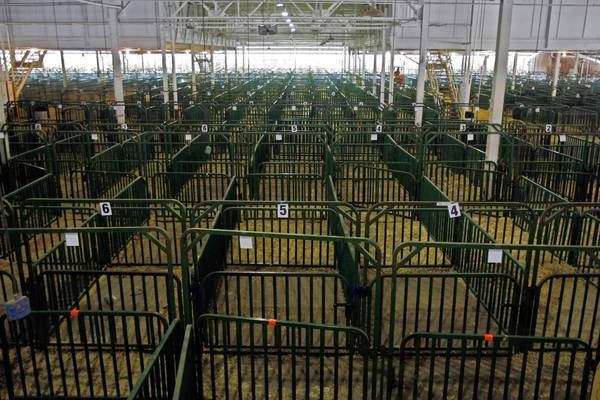 Pig enclosures stand empty at the Indiana State Fairgrounds. Health officials said cases of the flu were mild, but advised fairgoers to wash their hands.