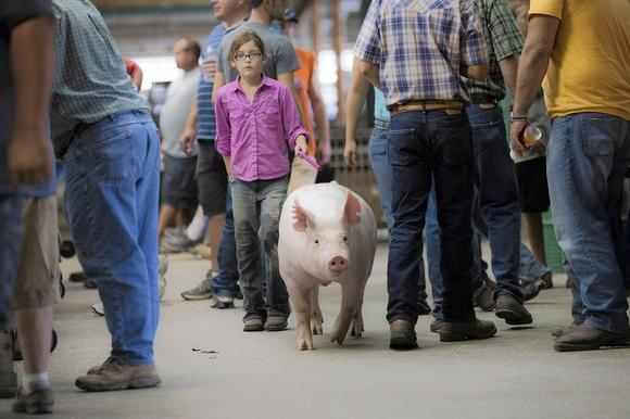 Eleven-year-old Mallory Burgene, who hails from Moweaqua, struts her pig's stuff at the Illinois State Fair in Springfield on Thursday.