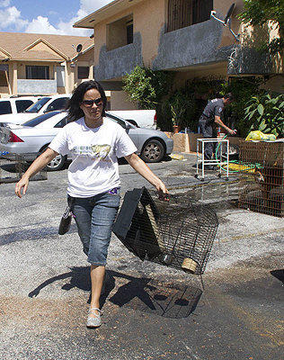 A crew cleans and removes cages from a Hialeah townhome of a couple facing dozens of animal cruelty charges.