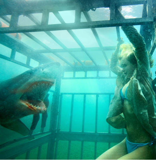 From 'Jaws' to 'Jabberjaw': 25 memorable sharks from pop culture: See, these teens are on vacay at the lake -- but OMG its a salt water lake! And OMG there are sharks in the water! And goodness knows these kids cant just stay out of the water.