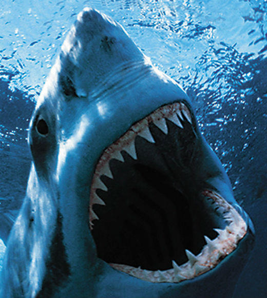From 'Jaws' to 'Jabberjaw': 25 memorable sharks from pop culture: Sharks fascinate and strike fear in the hearts of many, but sharks in pop culture arent always scary (just most of the time). From Jaws and Jersey Shore Shark Attack to cartoon Jabberjaw and the singing shark meme, check out this list of 25 our favorite pop culture sharks.   -- Jen Harper, Zap2it