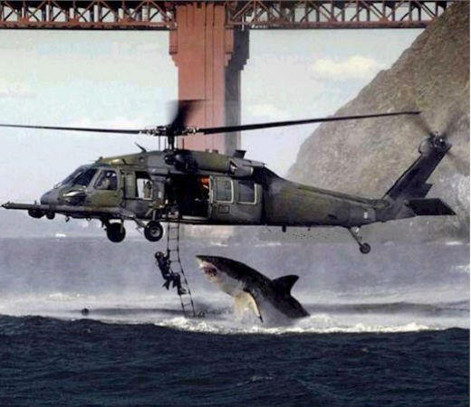 "This ""Photo of the Year"" email hoax that your mom still forwards you once a year is actually spliced together from a U.S. Air Force photo taken near the Golden Gate Bridge in San Francisco and a photo of a great white shark from South Africa."