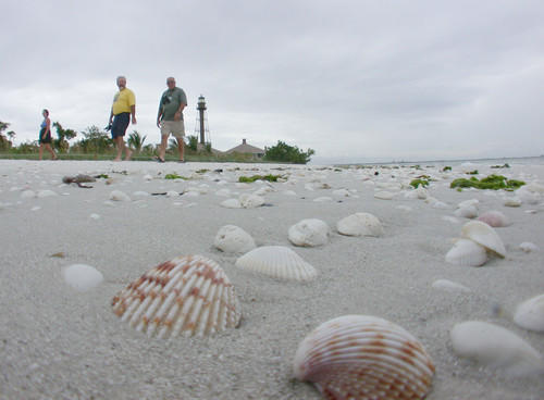 Shells may be hard to find on other beaches, but they wash ashore in piles on Sanibel and Captiva, two slender barrier islands connected by a bridge off the west coast of Florida. The beaches of these islets catch treasures from the Gulf of Mexico like a colander cradles spaghetti.<br> <br> Sanibel is 12 miles long and up to three miles wide; to its northwest, Captiva is five miles long and never more than half a mile wide. Together they boast 16 miles of beach lapped by Gulf waters and bayside coasts fringed in mangrove trees, with their exposed roots and bushy foliage.<br> <br> If finding shells is what you like, morning low tide, before the crowds arrive, is the time for a constitutional. The beaches are beauties -- easy waves, soft sand and warm water. I found lots of clams and scallops, but nothing unusual. I picked up a heap, learning only later how to be selective.<br> <br> -- Susan Spano, Los Angeles Times