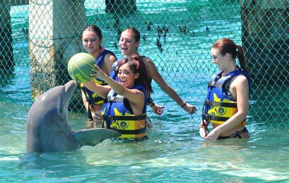 Is this the world's happiest or most miserable dolphin?