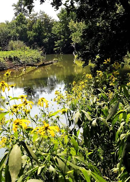 Land off Eastern Boulevard is the site of a proposed park that would feature about 300 linear feet of access to Antietam Creek for people to launch boats that can be carried, such as canoes or kayaks.