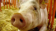 "<span style=""font-size: small;"">It's opening day for the Berrien County Youth Fair, and fair officials are taking extra precautions because of growing concerns over swine flu.</span>"