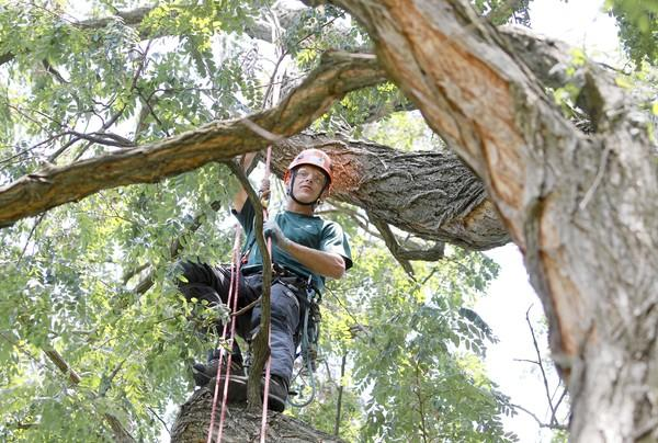 Beau Nagan, 32, of Westchester, finished fourth in the International Tree Climbing Championship in Portland, Ore.