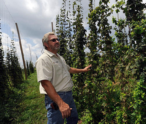 Henry Ruhlman looks at hops plants at his family farm, where they are growing hops and making craft brew beers.