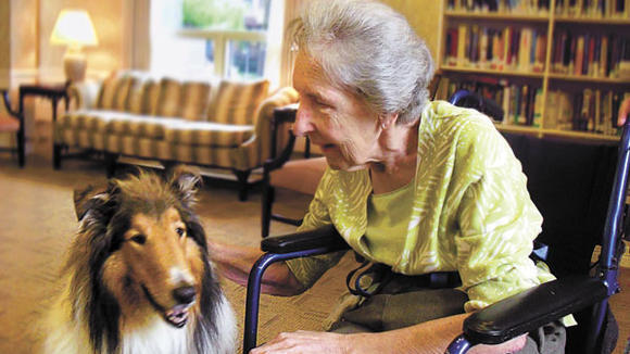 Therapy dogs share the love