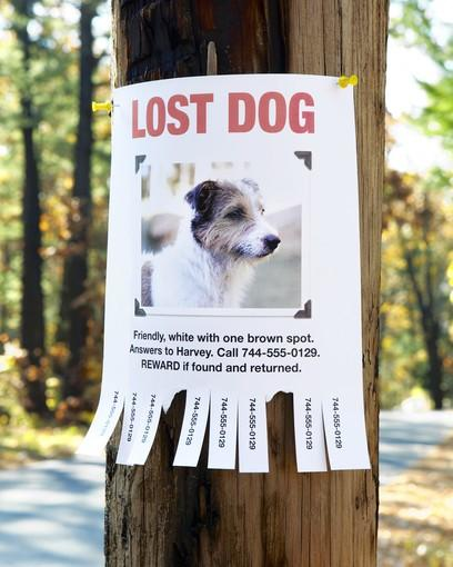 Tracking your pet