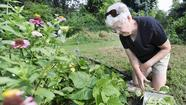 Babcock cultivates goodwill with community garden project