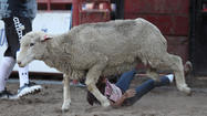 Photo Gallery: Mutton Busting