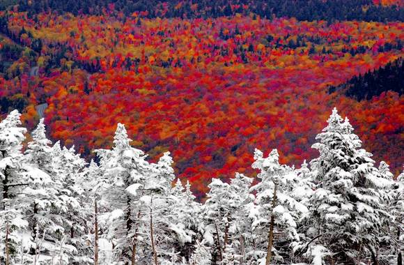 Snow-Covered trees on Cannon Mountain in Franconia, N.H., are seen overlooking the fall foliage in the valley. SNOW