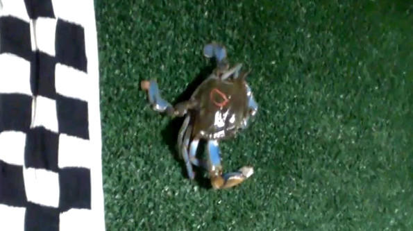Chris Davis' crab crosses the finish line to deliver him the top pick in the Orioles' upcoming fantasy football draft.
