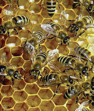 The Lehigh Valley Beekeepers Association will present the 2nd annual Honey Bee Awareness Day Saturday at Pool Wildlife Sanctuary in Emmaus