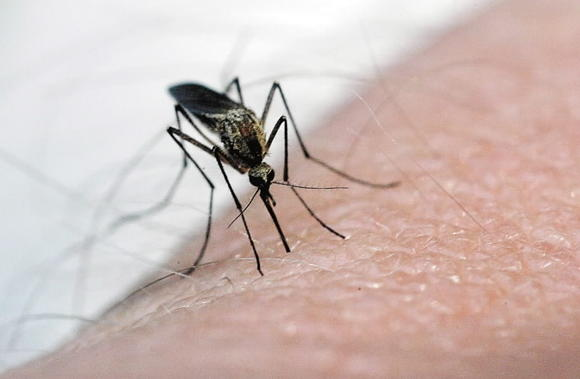 Second person in Maryland diagnosed with West Nile Virus.