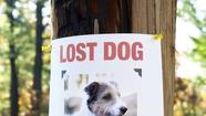 Lost pet? Technology can help