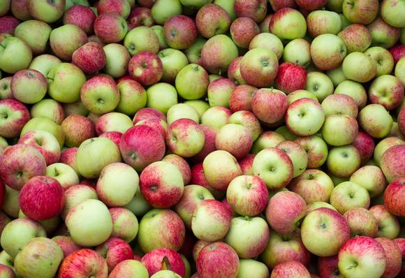 Freshly cropped apples