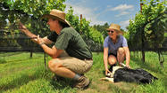 Arundel's largest family farm seeks to join state's growing wine industry