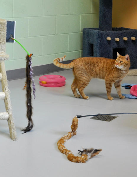 The Los Angeles Best Friends Pet Adoption & Spay/Neuter Center in Mission Hills' virtual play room for cats is patterned after the one pictured here in an Idaho Humane Society shelter. Anyone with an Internet connection can manipulate three movable toys in the room.