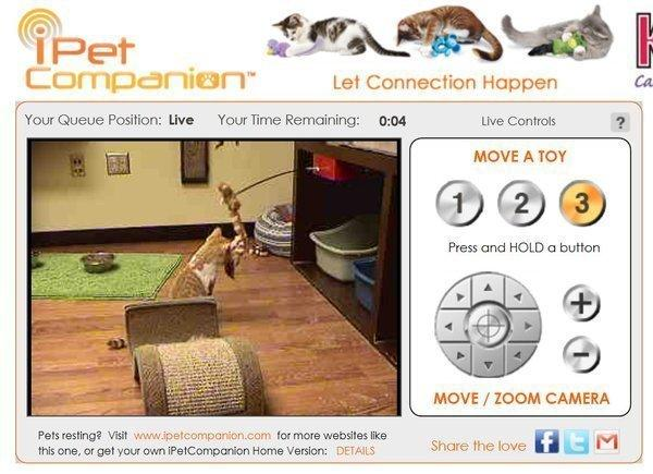 The new virtual play room at the L.A. Mission Hills animal shelter has a camera with live video and a Web-based interface that allows users to shake toys and play with cats in real time.