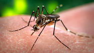 West Nile-infected mosquitoes found in St. Joseph County; Now what?