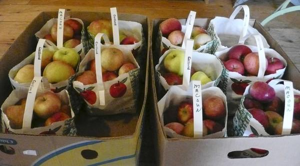Maine apples are among plenty of produce along western Maine's quiet highways in fall.