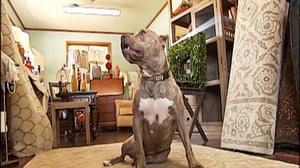 "Franklin County pit bull named ""Lily"" is in the spotlight"