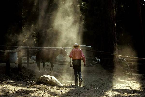 "Morgan Austin, a 17-year-old cowboy, approaches Riata, a horse that was neglected and abused. ""She just needs more pets than most horses,"" he said."