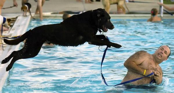 People and their pooches are invited to leap into the water at the annual Pooch Plunge on Wednesday, Aug. 22, at Potterfield Pool in Hagerstown. Proceeds benefit Humane Society of Washington County.
