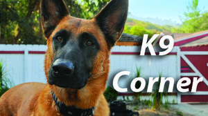 K9 CORNER: Active pets for active owners