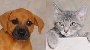 Danville-Boyle County Humane Society pets of the week for Aug. 21